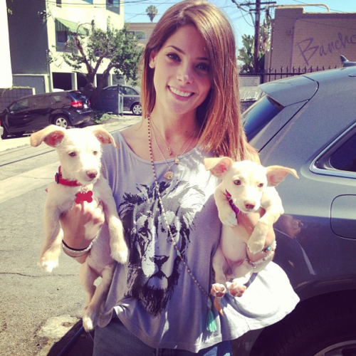 Ashley Two Puppies